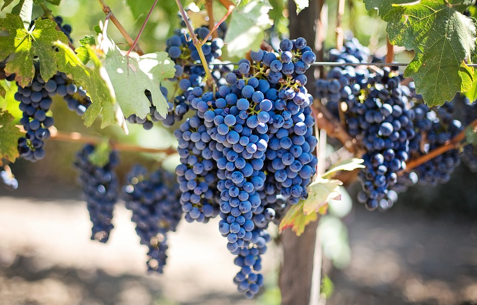 Gutedel Wein aus dem Markgräflerland kaufen - Online bei Markgräfler Weintheke.de | Markgräfler Weintheke